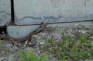 DSC03041蛇の道は3.jpg