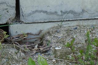 DSC03042蛇の道は4.jpg