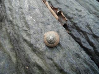 画像2011-10-08オランダ島マイマイ�A.jpg