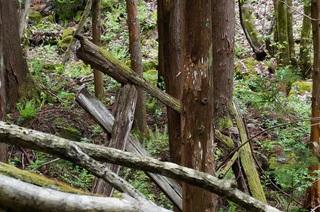 矢立の滝�G.jpg